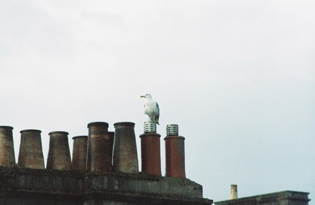 seagull sitting on a chimney top