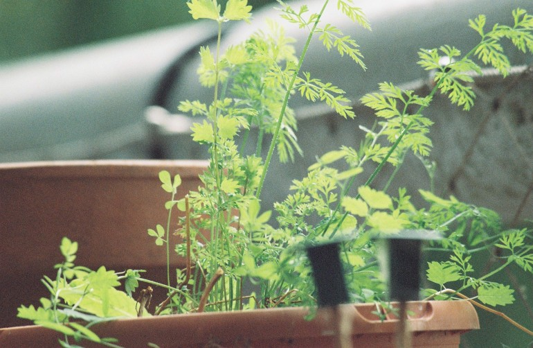 Plant 300mm Zoom