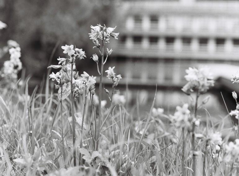 B&W Wildflowers