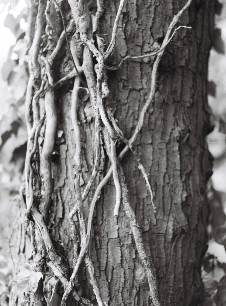 B&W Tree Detail