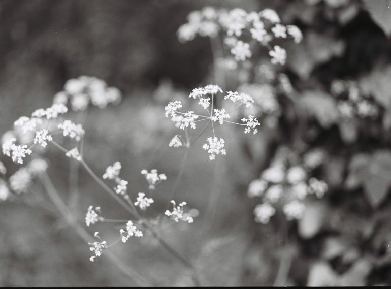 B&W small flowers