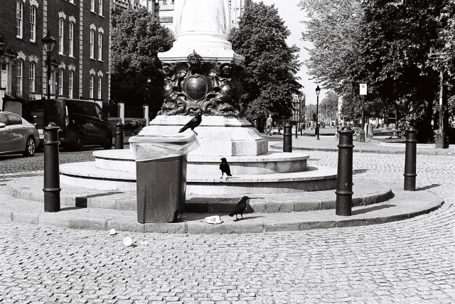 bin birds black and white photography